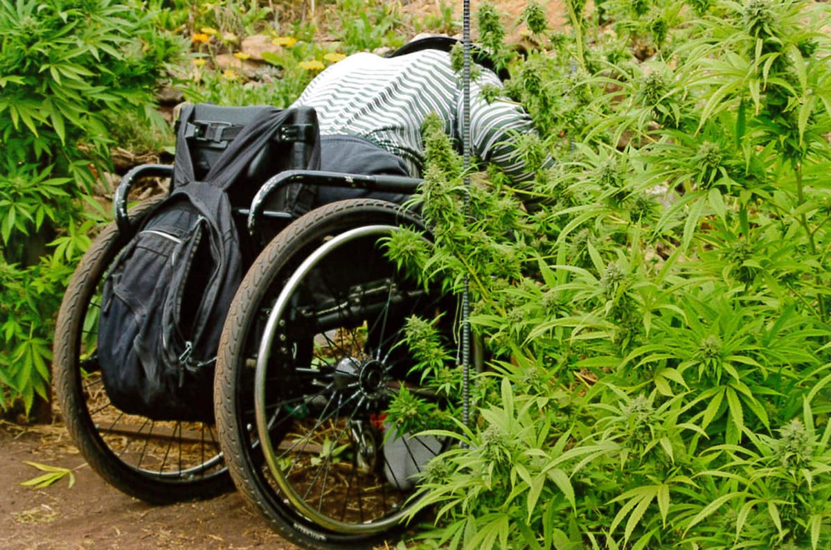WAMM volunteer tending plants at previous garden site, back during the days of medical marijuana collectives.