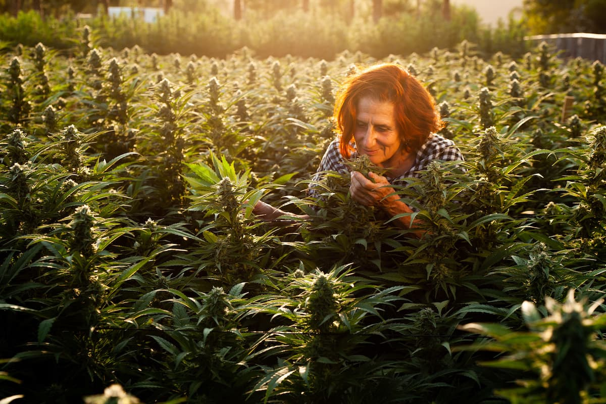 Photo of Valerie Leveroni in a cannabis field smelling a cannabis flower